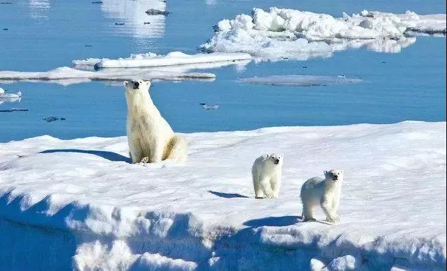 北极斯瓦尔巴群岛