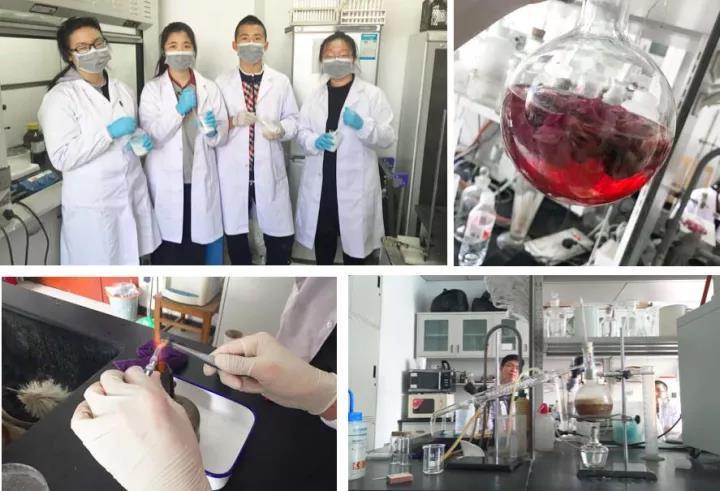 药物化学开发科研实践学生图